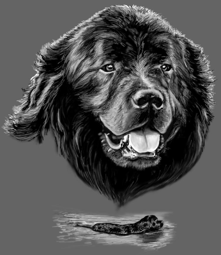 Newfoundland Dog , a digital drawing